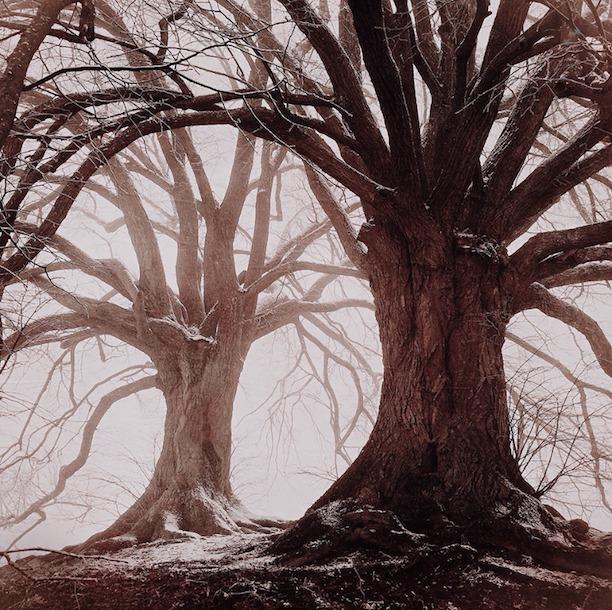 ippawards_trees_mariko_klug